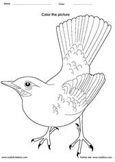 free bird worksheets for kindergarten birds worksheets for kindergarten bird crafts. Black Bedroom Furniture Sets. Home Design Ideas